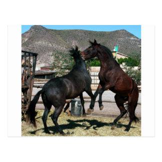 2 Horses in love,Almeria Spain  .Photo Colette Postcard