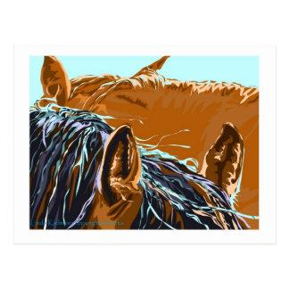2 Horses in the Sunshine Postcard