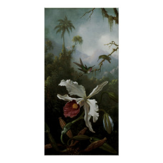 2 Hummingbirds White Orchid, Heade, Vintage Art Perfect Poster