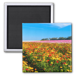 2 Inch Square Magnet flower fields