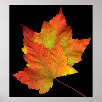 2 leaves print