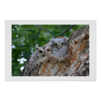 2 little luv birds poster