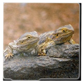 2 Lizards On Rock_10x10 Ceramic Tile