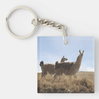 2 Llama - Two Llamas in Andes Mountain Plains Double-Sided Square Acrylic Keychain