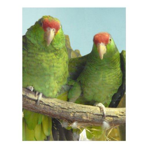 2 loros verdes tarjeta publicitaria