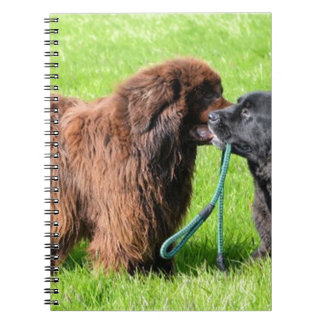 2 newfies.png notebooks