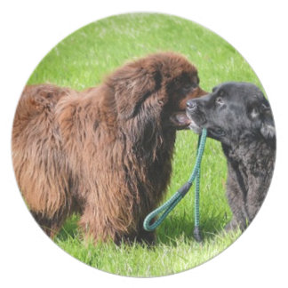 2 newfies.png plate