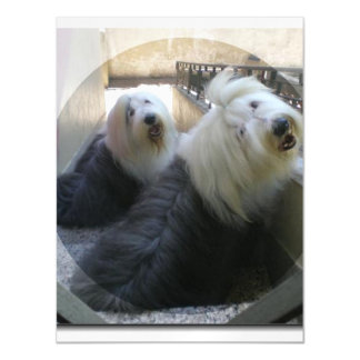 2 old english sheepdogs.png magnetic card