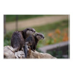2 otters poster