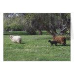 2 ovejas y un cordero tarjeta