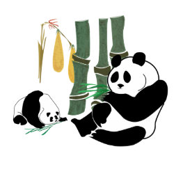 2 Pandas eat bamboo in tropical forest button button