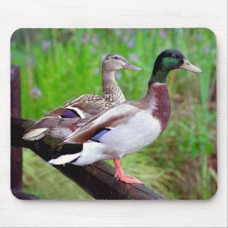 2 patos silvestres en una cerca Mousepad