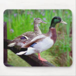 2 patos silvestres en una cerca Mousepad Tapete De Ratón