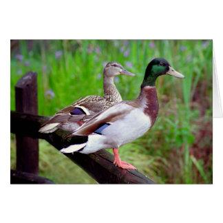 2 patos silvestres en una tarjeta de nota de la ce