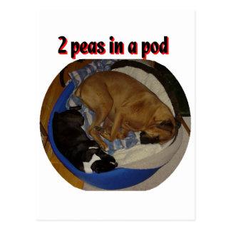 2 Peas in a Pod Postcard