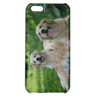 2 perros perdigueros de oro que ponen en hierba