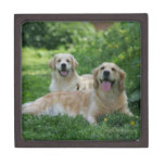 2 perros perdigueros de oro que ponen en hierba cajas de joyas de calidad