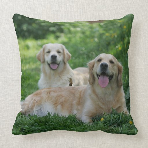 2 perros perdigueros de oro que ponen en hierba cojín decorativo