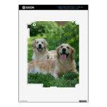 2 perros perdigueros de oro que ponen en hierba pegatina skin para iPad 3