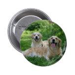 2 perros perdigueros de oro que ponen en hierba pin redondo de 2 pulgadas