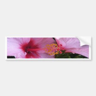 2 Pink Hibiscus, Dark Bumper Sticker