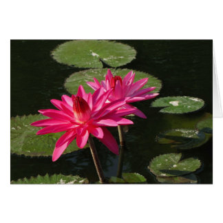 2 pink water lilies greeting card #1  7711
