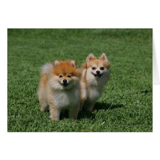 2 Pomeranians Looking at Camera Card