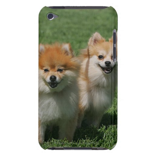 2 Pomeranians Looking at Camera iPod Touch Case-Mate Case