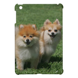 2 Pomeranians Looking at Camera Cover For The iPad Mini