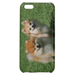 Case Savvy Matte Finish iPhone 5C Case with Pomeranian Phone Cases design