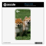 2 Pomeranians Looking at Camera Decals For iPhone 4S