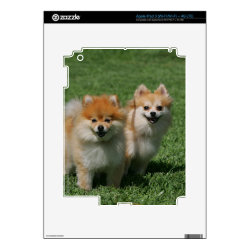2 Pomeranians Looking at Camera Skin For iPad 3
