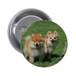 2 Pomeranians que mira la cámara Pin Redondo De 2 Pulgadas