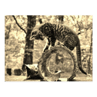 2 Rescued Tabby Kittens Playing on a Log Postcard