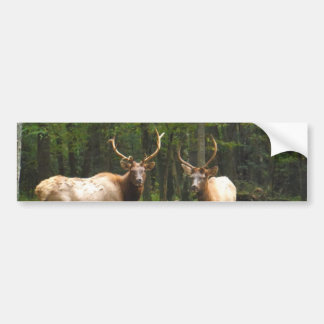 2 Rocky Mountain Elk Bumper Sticker