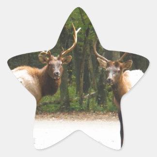 2 Rocky Mountain Elk Star Sticker