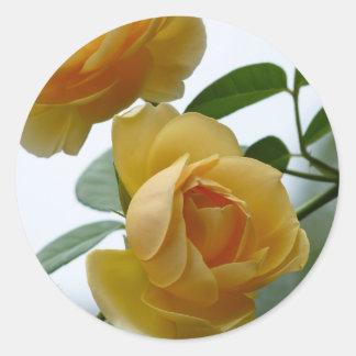 2 rosas amarillos pegatina redonda