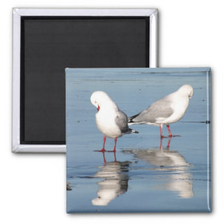 2 Seagulls on a Beach 2 Inch Square Magnet