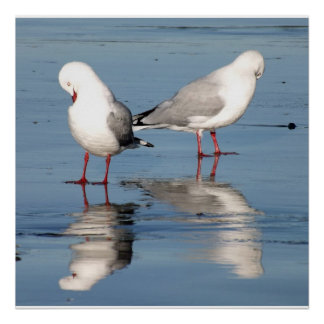2 Seagulls on a Beach Posters