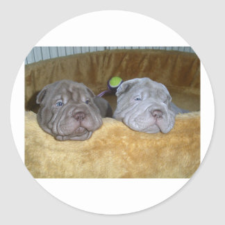 2 shar pei puppies.png classic round sticker