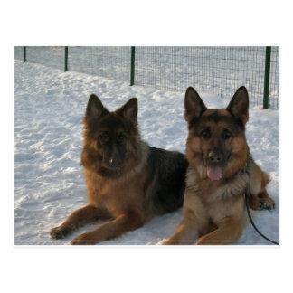 2 shepherds.png alemanes postales