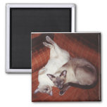 2 Siamese Cats: Tortie and Seal Point 2 Inch Square Magnet
