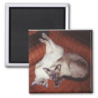 2 Siamese Cats: Tortie and Seal Point Magnet