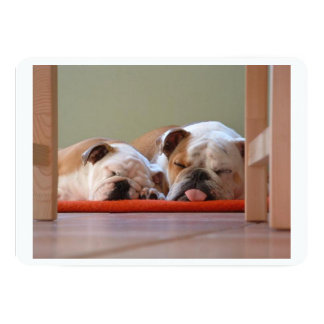 2 sleeping bulldogs.png card