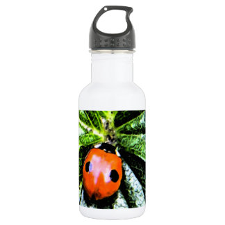 2-spot ladybug 4 stainless steel water bottle