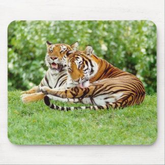 2 tigers in grass mouse pad