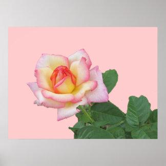 2-Tone Pink Rose Print