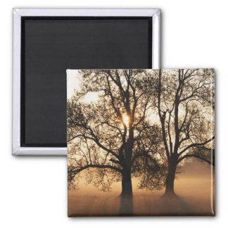 2 TREES SEPIA GOLD ORANGE 2 INCH SQUARE MAGNET