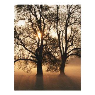 2 TREES SEPIA GOLD ORANGE FLYER