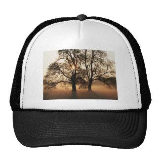 2 TREES SEPIA GOLD ORANGE HAT